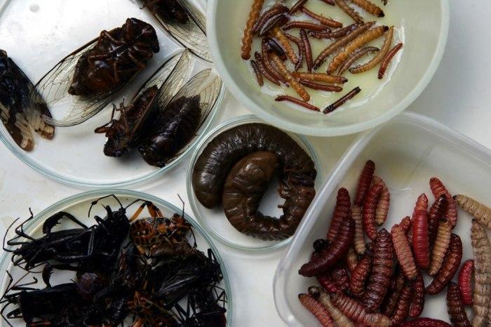 insectos-comestibles-02-1040lg040810